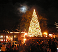 Kirkland-tree_lighting